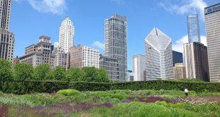 Urban Gardening - der neue Trend, Grünes selbst zu schaffen