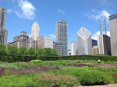 Urban Gardeining 445x330 - Urban Gardening - der neue Trend, Grünes selbst zu schaffen