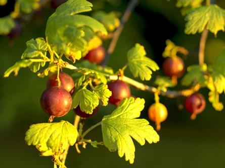 Das Ende der Garten Saison – der Herbst
