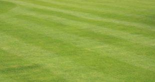 Rasen 310x165 - Wann ist die Zeit gekommen, um den Rasen zu vertikutieren?