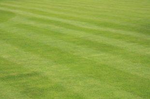 Rasen 310x205 - Wann ist die Zeit gekommen, um den Rasen zu vertikutieren?