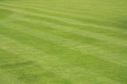 Wann ist die Zeit gekommen, um den Rasen zu vertikutieren?