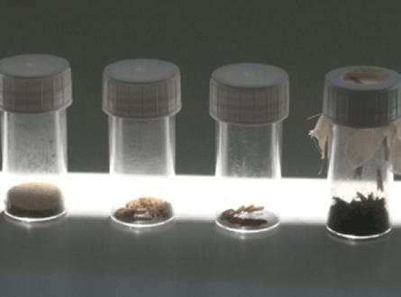 biologische Schaedlingsbekaempfung 445x330 - Biologische Schädlingsbekämpfung gewinnt mehr Anhänger