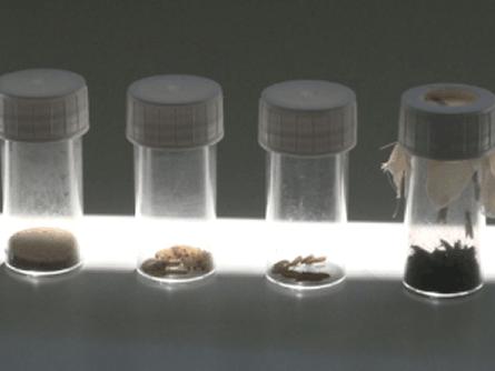 Biologische Schädlingsbekämpfung gewinnt mehr Anhänger