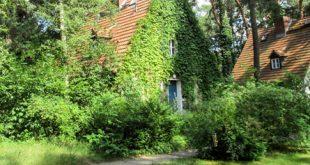 Straeucher 310x165 - Sträucher im Garten richtig einsetzen