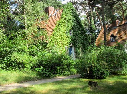 Straeucher 445x330 - Sträucher im Garten richtig einsetzen