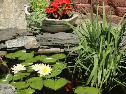 Der Gartenteich - ein Ruhepol im Garten