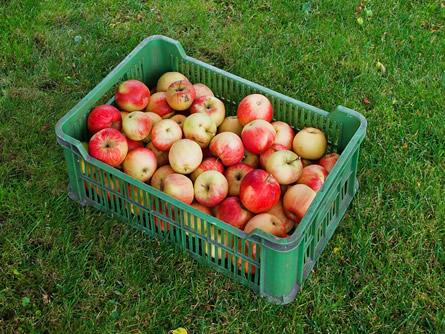 Gartenarbeit – rechtzeitig an den Herbst denken