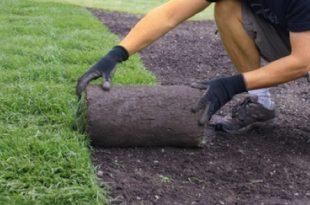 Rollrasen 310x205 - Das grüne Glück - Urban Gardening Trend in Deutschland