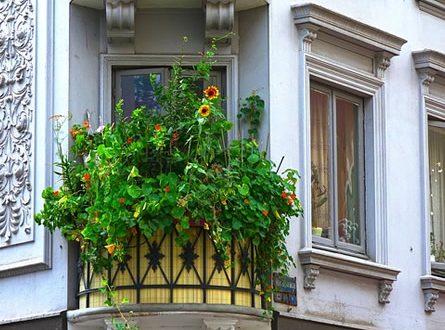 Balkonbepflanzung 445x330 - Gehölze auf dem Balkon?