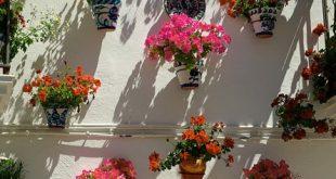 Pflanzkuebel 310x165 - Der Kübelgarten - Gartenparadies auf kleinstem Raum