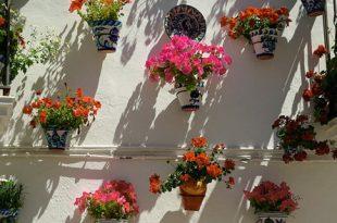 Pflanzkuebel 310x205 - Der Kübelgarten - Gartenparadies auf kleinstem Raum