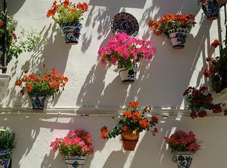 Pflanzkuebel 445x330 - Der Kübelgarten - Gartenparadies auf kleinstem Raum