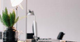 Zimmerpflanze Buero 310x165 - Grün am Arbeitsplatz: Pflanzen sorgen für ein angenehmes Raumklima