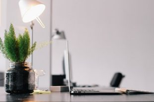 Zimmerpflanze Buero 310x205 - Grün am Arbeitsplatz: Pflanzen sorgen für ein angenehmes Raumklima