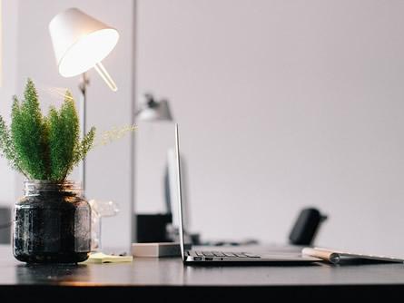 Grün am Arbeitsplatz: Pflanzen sorgen für ein angenehmes Raumklima
