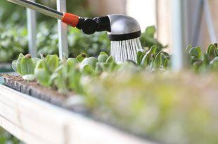 Bewaesserung 310x205 - Regenmeister – der Profi für Gartenbewässerung