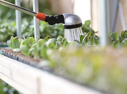 Bewaesserung 445x330 - Regenmeister – der Profi für Gartenbewässerung