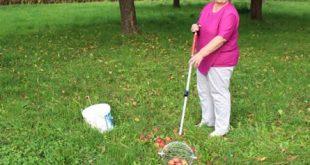 Apfelernte 310x165 - Erntezeit: Praktische Helfer erleichtern die Gartenarbeit
