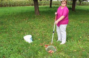 Apfelernte 310x205 - Erntezeit: Praktische Helfer erleichtern die Gartenarbeit