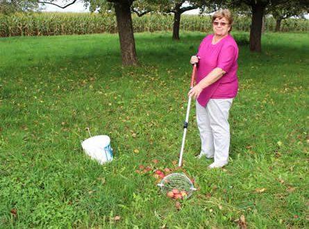 Apfelernte 445x330 - Erntezeit: Praktische Helfer erleichtern die Gartenarbeit