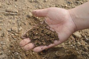 Erde Mikroorganismen 310x205 - Effektive Mikroorganismen – kleine Helfer für Haus und Garten