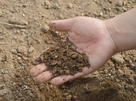 Erde Mikroorganismen 445x330 - Effektive Mikroorganismen – kleine Helfer für Haus und Garten