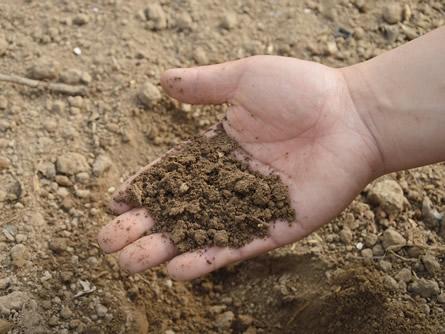 Erde mit Mikroorganismen