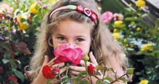 Nostalgie Rosen 310x165 - Die Rose: Königin der Blumen und Liebling der Hobby-Gärtner