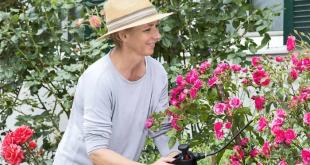 Rosen pflegen 310x165 - Rosen - sensible Gartenschönheiten