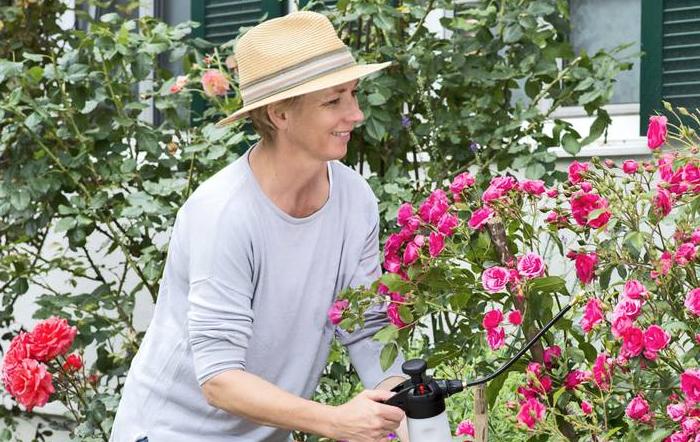 Rosen – sensible Gartenschönheiten