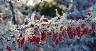 Garten im Winter 310x165 - Den Garten winterfest machen