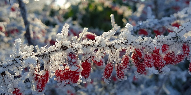 Garten im Winter 660x330 - Den Garten winterfest machen