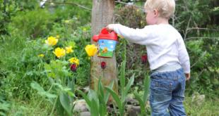 Kinderbeet 310x165 - Kinderbeet - welche Pflanzen eigenen sich am besten ?