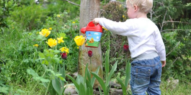Kinderbeet 660x330 - Kinderbeet - welche Pflanzen eigenen sich am besten ?