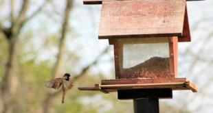 Vogelfutterhaus 310x165 - Vogelfutterhaus – mehr Vögel im Garten