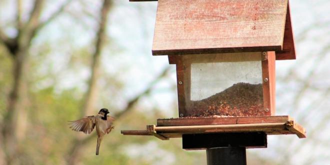 Vogelfutterhaus 660x330 - Vogelfutterhaus – mehr Vögel im Garten