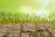 Rasensamen 110x75 - Rasensamen kaufen – welche Rasensorte ist die richtige?
