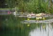 Schwimmteich 110x75 - Pool, Schwimmteich oder Biopool – Baden für Genießer