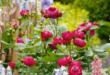 Rosengarten 110x75 - Insektenparadies mit Rosen gestalten