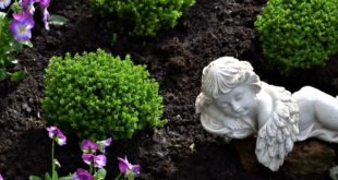 Grabbepflanzung 310x165 - Grabbepflanzung – pflegeleichte Friedhofspflanzen erleichtern die Arbeit