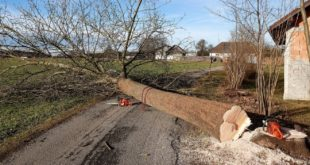 Baum faellen 310x165 - Bäume fällen - in der Theorie einfacher als in der Praxis