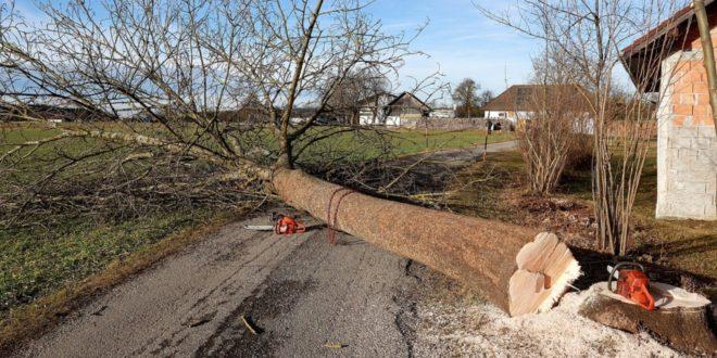 Baum faellen 660x330 - Bäume fällen - in der Theorie einfacher als in der Praxis