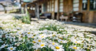Traumhaus mit Garten gesucht