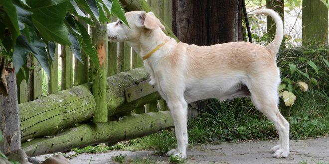 Der Doppelstabmattenzaun als Hundezaun