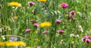 Gartengestaltung für Einsteiger – Urlaubsflair mit einfachen Mitteln erreichen