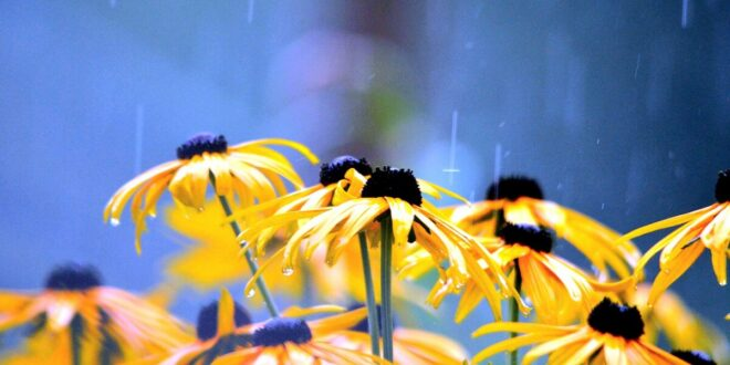 Wetterfeste Gartenboxen – vielseitig verwendbar