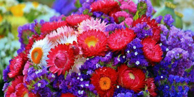Trockenblumen und künstliche Pflanzen – für alle ohne grünen Daumen